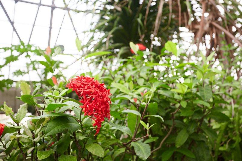 東京都夢の島熱帯植物館館内